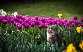 Picture cat, look, background