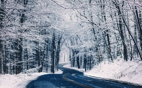 Picture winter, road, forest, snow, trees, nature, landing