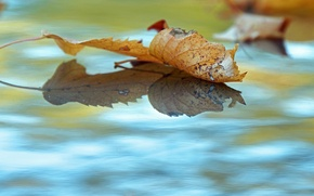 Picture autumn, water, fallen leaves