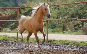 Picture horse, dirt, red, bokeh