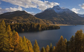 Wallpaper forest, autumn, Alps, Lake Sils, lake, trees, The Sils im Engadin, lake Sils, Sils im ...