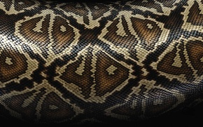Picture snakes, texture, skin
