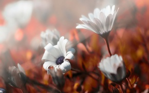 Picture autumn, flowers, nature