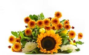 Picture sunflower, bouquet, yellow, tulips, white background, white, orange, chrysanthemum