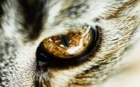 Picture cat, macro, close-up, wool, the pupil, cat's eye