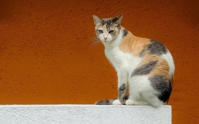 Picture cat, look, background, wall
