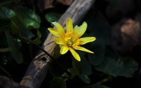Picture flower, grass, yellow, spring, petals, awakening