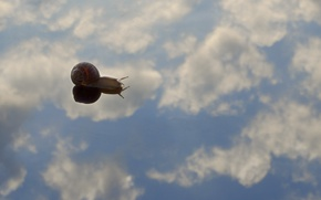 Picture sky, water, clouds, reflection, shell, mirror, snail