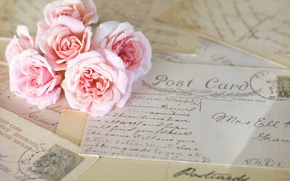 Picture flowers, cards, pink, letters, roses, vintage