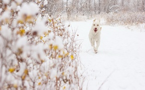Picture snow, background, dog