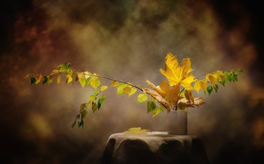 Picture autumn, leaves, branches, vase, maple, birch, table, still life