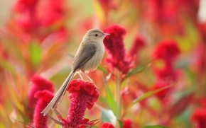 Picture flower, summer, bird, meadow