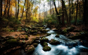 Picture forest, the sun, stream, stones, foliage, moss, photographer, thresholds, Aaron Woodall