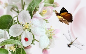Picture flowers, collage, butterfly, ladybug, dragonfly