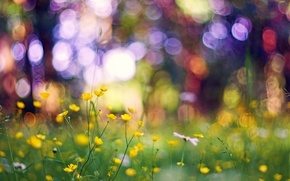 Picture grass, macro, flowers, glare, yellow, bokeh