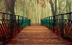 Picture autumn, leaves, trees, bridge, nature, handrails