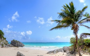 Picture sand, sea, wave, beach, nature, palm trees, rocks