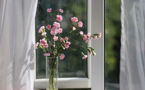 Wallpaper vase, window, bouquet, clove