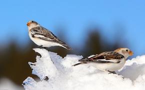 Picture winter, the sky, snow, bird, beak