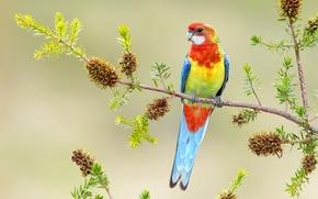 Wallpaper bright, branch, parrot, bird