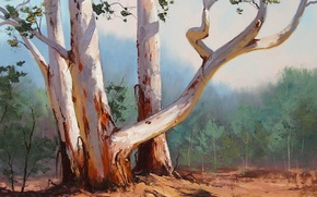 Picture forest, trees, nature, art, trunk, curves, artsaus