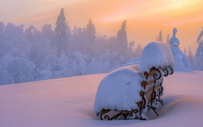 Picture forest, snow, sunset, snow, Shop