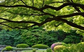Picture trees, Park, Japan, Tokyo, Tokyo, Japan, Imperial Shinjuku Park, Shinjuku Gyoen, Shinjuku Gyoen National Garden