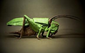 Picture paper, background, grasshopper, origami