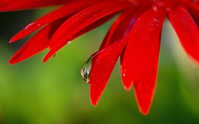 Picture flower, macro, petals, a drop of water, bright red