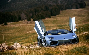 Picture Roadster, Lamborghini, Nature, Front, LP700-4, Aventador, Supercars, Silver, Door, Ligth