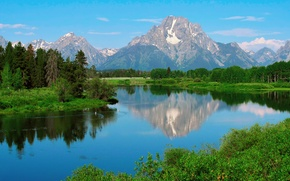 Picture forest, water, reflection, nature, duck, USA, Wyoming, Grand Teton national Park, Mount Moran, summer-spring