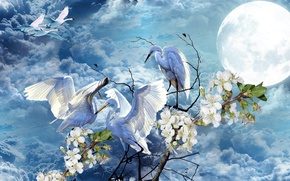 Picture the sky, flowers, the moon, Spring, swans, storks