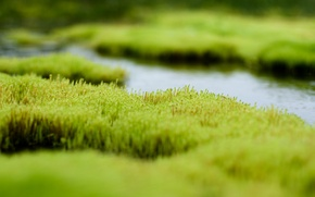 Picture greens, grass, water, swamp