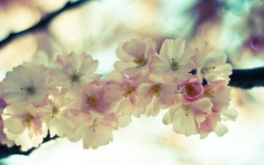 Wallpaper tenderness, macro, branch, flowers, Sakura, light, flowering, pink, the sky, spring