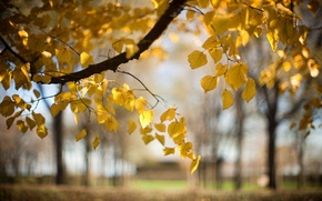 Picture autumn, leaves, nature, tree, branch, blur
