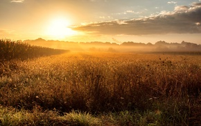 Picture field, fog, dawn, morning