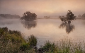 Picture grass, trees, fog, lake, shore, morning