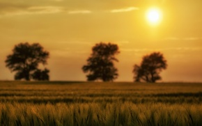 Picture greens, the sky, the sun, macro, trees, nature, background, tree, widescreen, Wallpaper, plant, spikelets, wallpaper, …