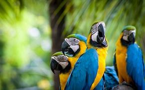 Picture birds, feathers, parrots, parrots