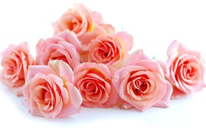 Picture flower, flowers, roses, bouquet, beautiful