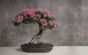 Wallpaper leaves, light, table, tree, Japan, bonsai, stand