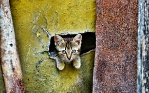 Wallpaper look, eyes, baby, kitty