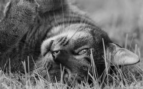Picture cat, look, muzzle, black and white, monochrome