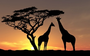 Wallpaper animals, Africa, yellow-brown background, shadows, fauna, tree, giraffes, sunset