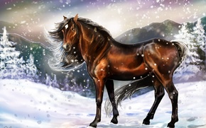 Picture cold, winter, look, snow, traces, animal, horse, art, mane, painting