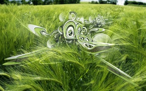 Picture field, patterns, spikelets