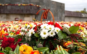 Wallpaper flowers, memory, Victory Day, 9 May, Victory Day, George ribbon, May 9