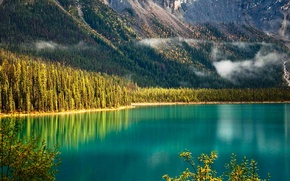 Picture forest, trees, mountains, slope, Canada, British Columbia, Yoho national Park, Emerald lake
