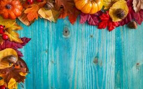 Picture autumn, leaves, Board, acorns