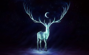 Picture the sky, stars, the moon, Deer, horns